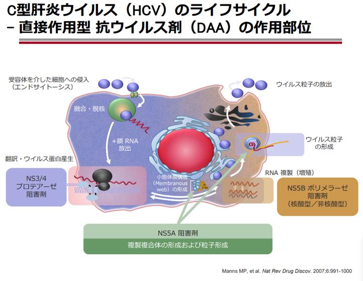 C型肝炎ウイルスのライフサイクル